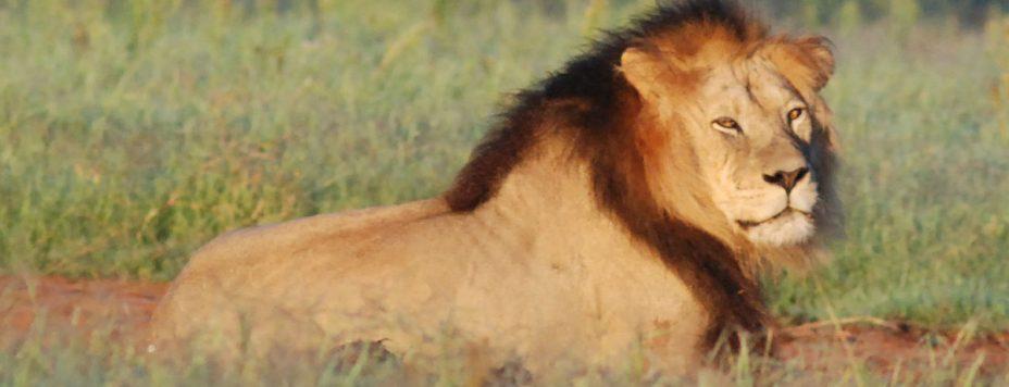 Death-Conquering Lion